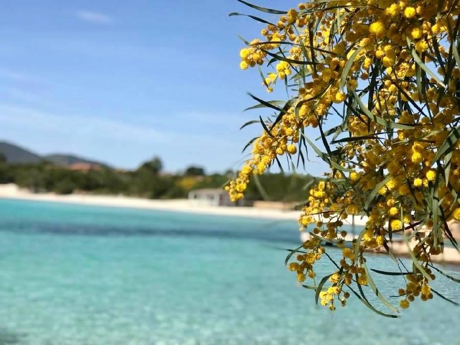 Foto Sardegna, Marzo pazzerello al mare senza ombrello!